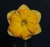 Seedling JAH 40/91B