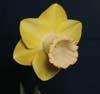 Seedling 02-185
