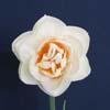 Blossom Lady