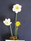 Vase of Miniatures